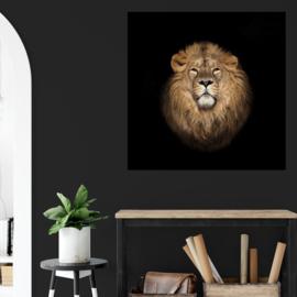 Portret van een leeuw tegen zwarte achtergrond