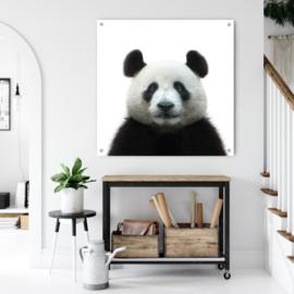 Portret van de Pandabeer