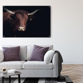 Portret van een koe tegen zwarte achtergrond