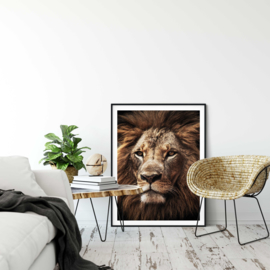 Afrikaanse leeuw poster