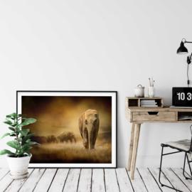 Olifanten poster