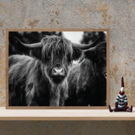 Schotse hooglander poster zwart wit