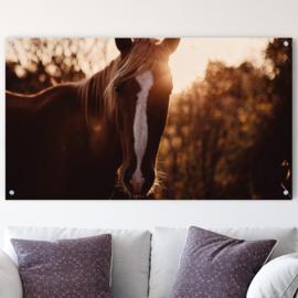 Paard tegen ondergaande zon