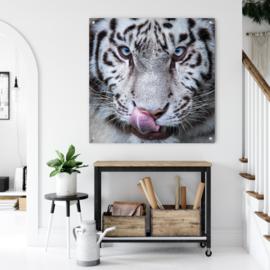 Bengaalse witte tijger