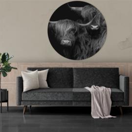 Rond schilderij van een Schotse hooglander in zwart-wit