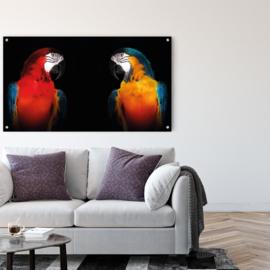 Parrot twins