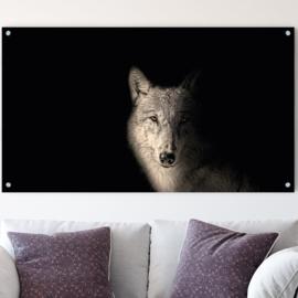 Portret van een wolf tegen zwarte achtergrond