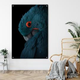 Blauwe ara op acrylglas 120x80cm met ophangsysteem