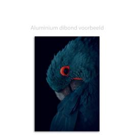 Roodsnaveltoekan van Aert Schouman