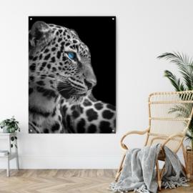 Panter met blauwe ogen op staal, 90x70cm met ophangsysteem