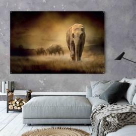 Kudde olifanten in de avond