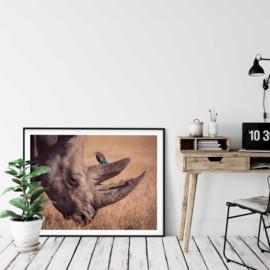 Neushoorn poster