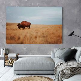 Bison in natuurlijke leefomgeving