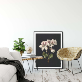 Pelargonium bloemen poster