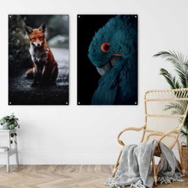 Dubbelzijdige kunst: Night fox met de prachtige blauwe Ara