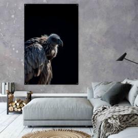 Portret van een grijze Gier