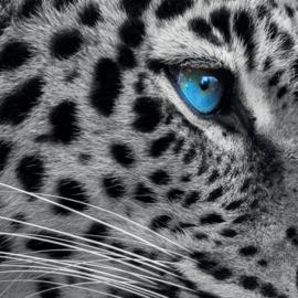 Panter met blauwe ogen
