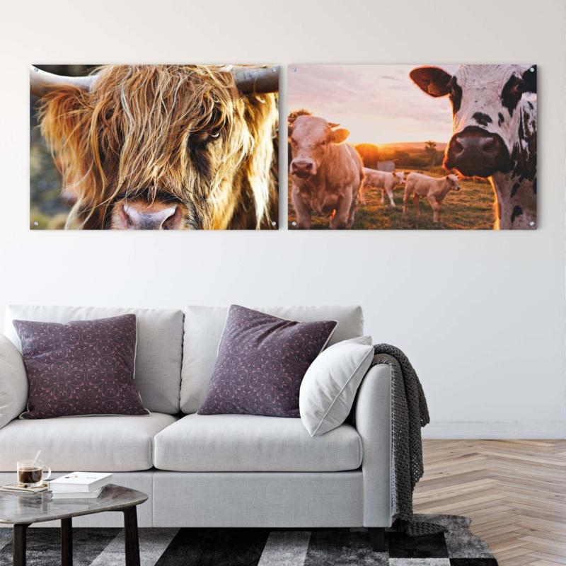 Dubbelzijdige kunst: Weiland vol koeien met een close up van een Schotse hooglander