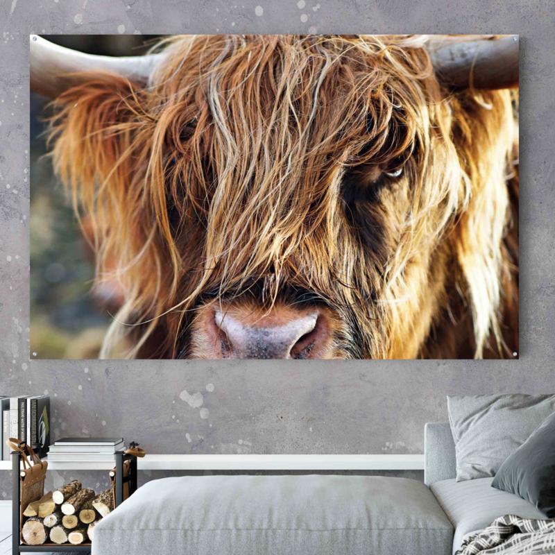 Schotse hooglander close up