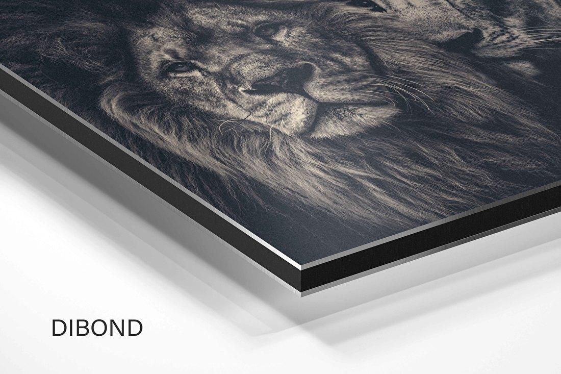 Aluminium dibond schilderij