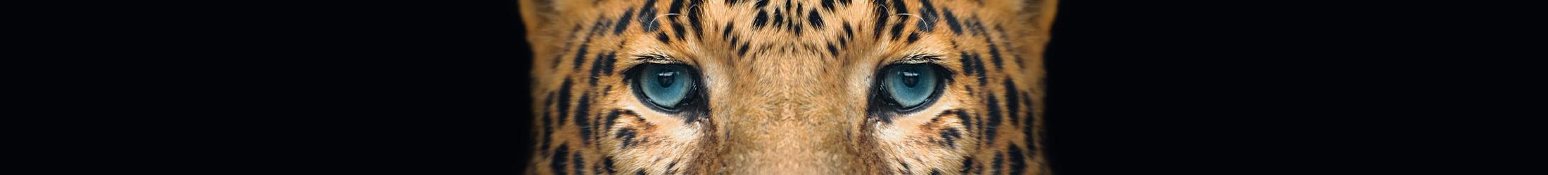 Wilde dieren slideshow