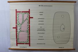 Schoolplaat van een cel (dierlijk)