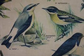 Schoolplaat zangvogels
