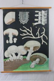 Schoolplaat van  de champignon