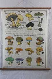 Dubbele geplastificeerde schoolplaat van paddestoelen en de indeling van het plantenrijk