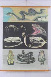 Schoolplaat van de slang
