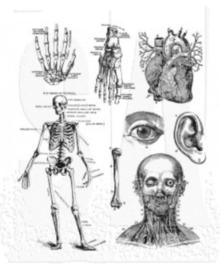 Cadaverous (CMS378)