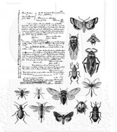Entomology (CMS328)