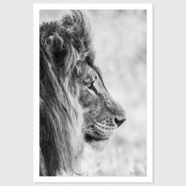 Leeuw portret
