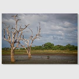 Landscape Sri Lanka