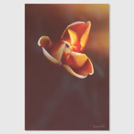 Tulp solo