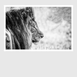 Leeuw horizontaal