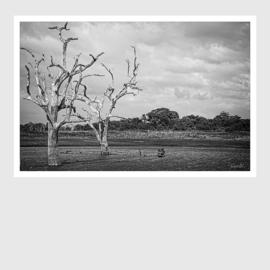 Sri Lanka Landscape