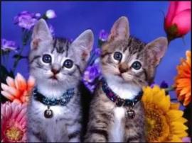 Kittens 20x30