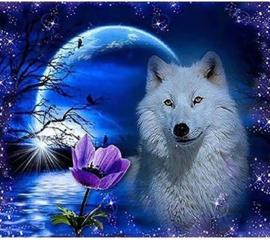 Witte Wolf met Maan 20x30
