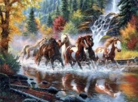 Paarden in Water 40x50