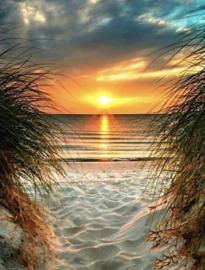 Strand met Palmbomen 40x50