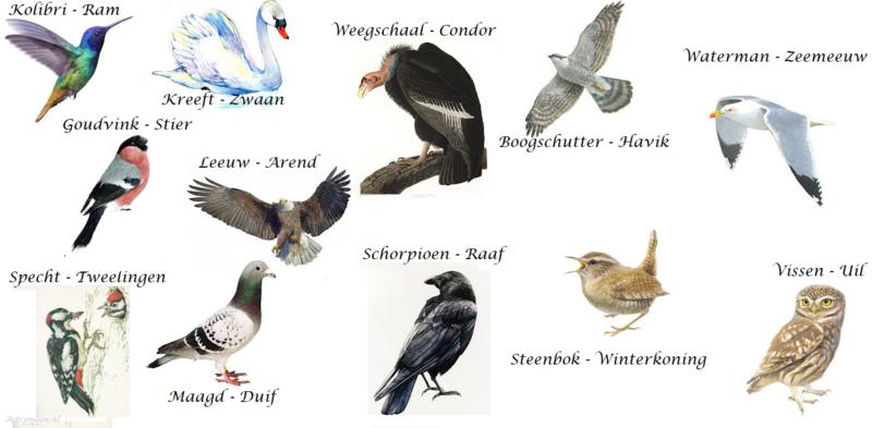 Welke vogel hoort bij jouw sterrenbeeld?