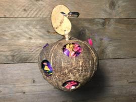 Coco fun ball