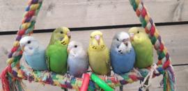 Voerpakketten per vogelsoort
