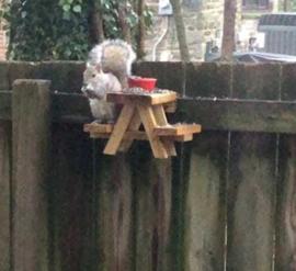 Eekhoorn picknick tafeltje