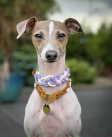 halsbanden & lijnen voor kleine(re) honden