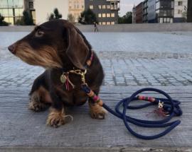 halsbanden & lijnen voor kleine honden