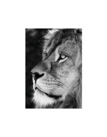 Poster A5 Leeuw