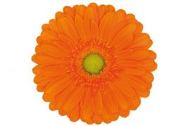 Gerbera oranje