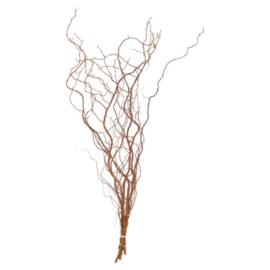 Salix goud (1tak)